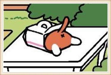 あかげさん ケーキ箱